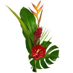 livraison fleurs exotiques domicile l 39 atelier des fleurs. Black Bedroom Furniture Sets. Home Design Ideas