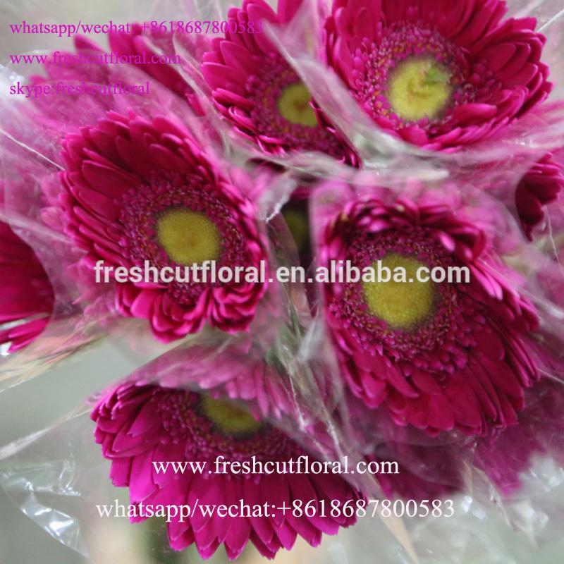 Livraison fleurs international pas cher l 39 atelier des fleurs for Livraison fleurs pas cher livraison gratuite
