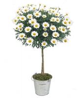 Vente fleurs par correspondance l 39 atelier des fleurs for Vente de fleurs par correspondance