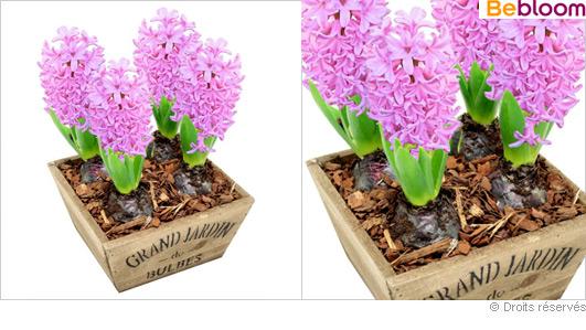 Fleurs pas cher livraison l 39 atelier des fleurs for Livraison fleurs pas cher livraison gratuite