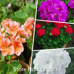 fleurs domicile livraison gratuite l 39 atelier des fleurs. Black Bedroom Furniture Sets. Home Design Ideas