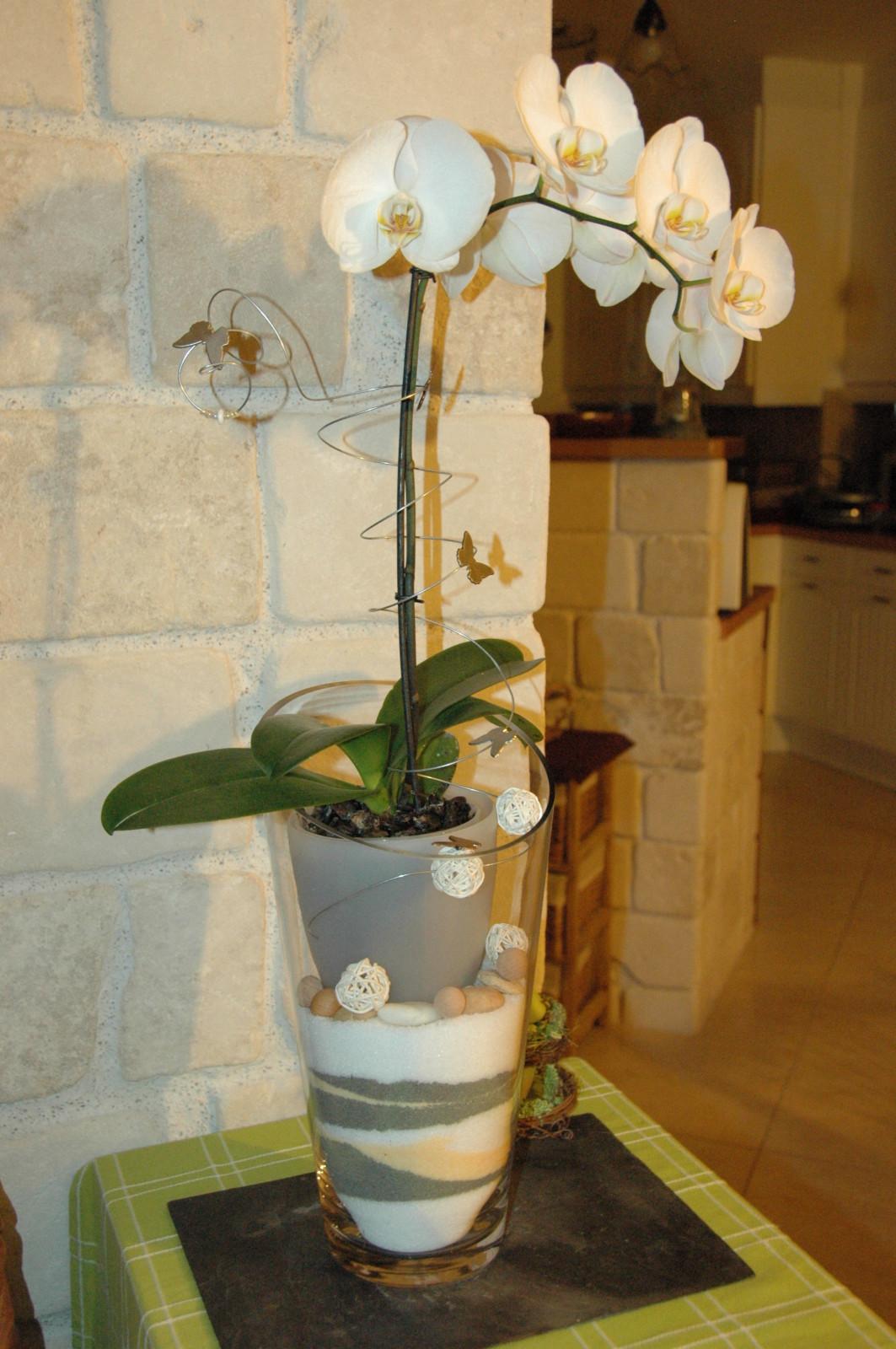 cache pot pour plusieurs orchid es l 39 atelier des fleurs. Black Bedroom Furniture Sets. Home Design Ideas