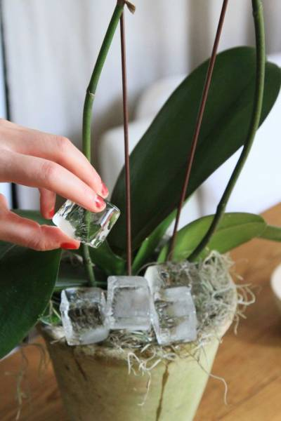pot pour plusieurs orchid es l 39 atelier des fleurs. Black Bedroom Furniture Sets. Home Design Ideas