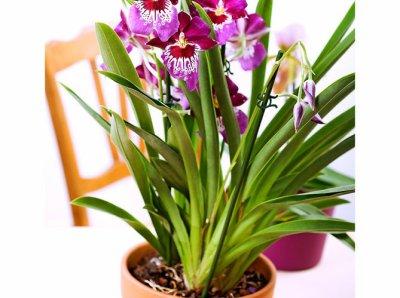 diff rente sorte d orchid e l 39 atelier des fleurs. Black Bedroom Furniture Sets. Home Design Ideas