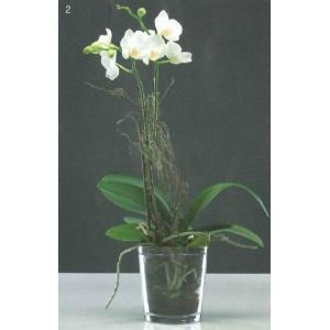 cache pot orchid e transparent l 39 atelier des fleurs. Black Bedroom Furniture Sets. Home Design Ideas