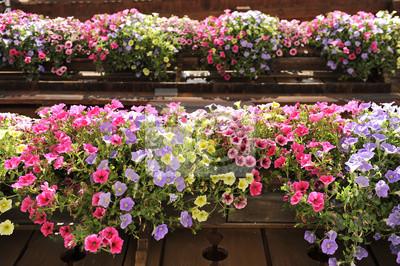fleurs de balcon printemps l 39 atelier des fleurs. Black Bedroom Furniture Sets. Home Design Ideas
