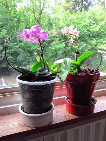 entretenir son orchid e l 39 atelier des fleurs. Black Bedroom Furniture Sets. Home Design Ideas