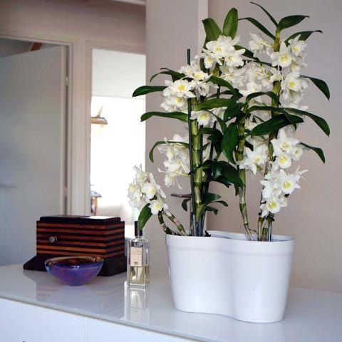 soin des orchid es en pot l 39 atelier des fleurs. Black Bedroom Furniture Sets. Home Design Ideas
