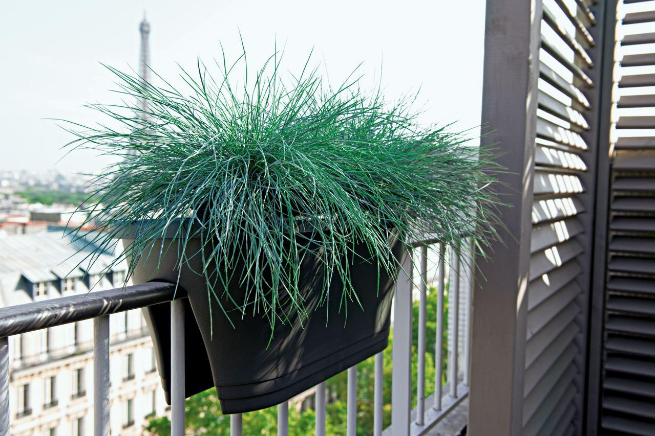 plante haute pour jardiniere l 39 atelier des fleurs. Black Bedroom Furniture Sets. Home Design Ideas