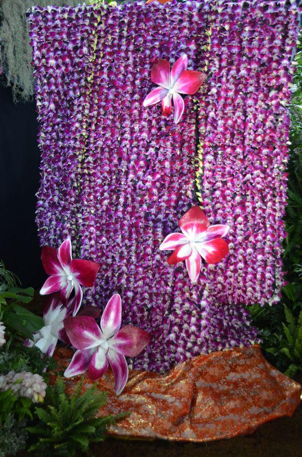 comment s occuper d une orchid e l 39 atelier des fleurs. Black Bedroom Furniture Sets. Home Design Ideas
