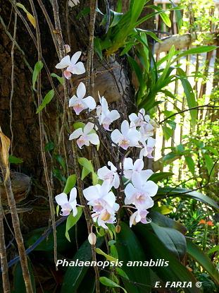 orchid e milieu naturel l 39 atelier des fleurs. Black Bedroom Furniture Sets. Home Design Ideas