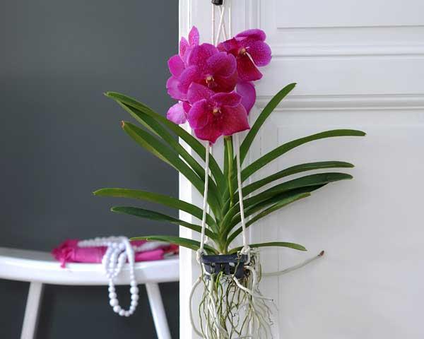 orchid e vanda soins l 39 atelier des fleurs. Black Bedroom Furniture Sets. Home Design Ideas