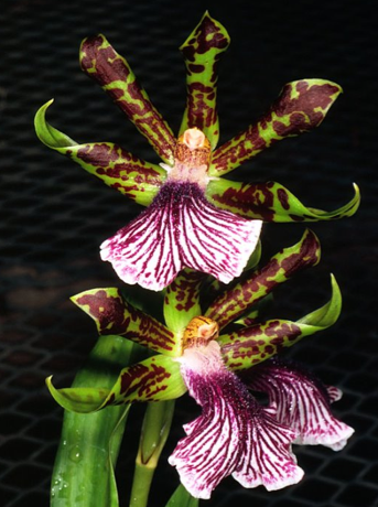 esp ce d orchid e l 39 atelier des fleurs. Black Bedroom Furniture Sets. Home Design Ideas