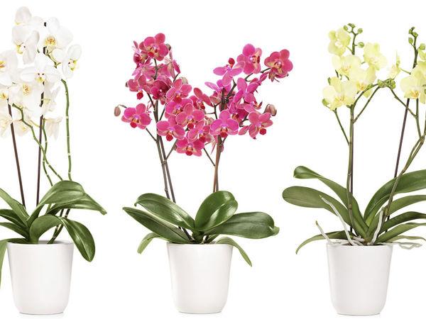 comment entretenir une orchid e qui a perdu ses fleurs l 39 atelier des fleurs. Black Bedroom Furniture Sets. Home Design Ideas