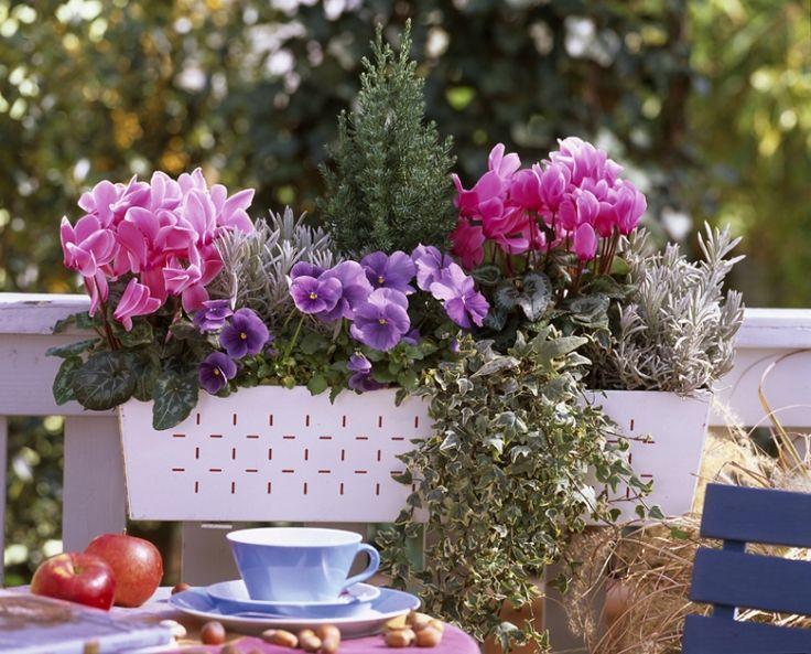 fleur pour jardiniere balcon - l'atelier des fleurs