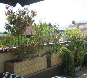 Plantes pour jardinieres exterieures l 39 atelier des fleurs for Jardiniere pour plante grimpante