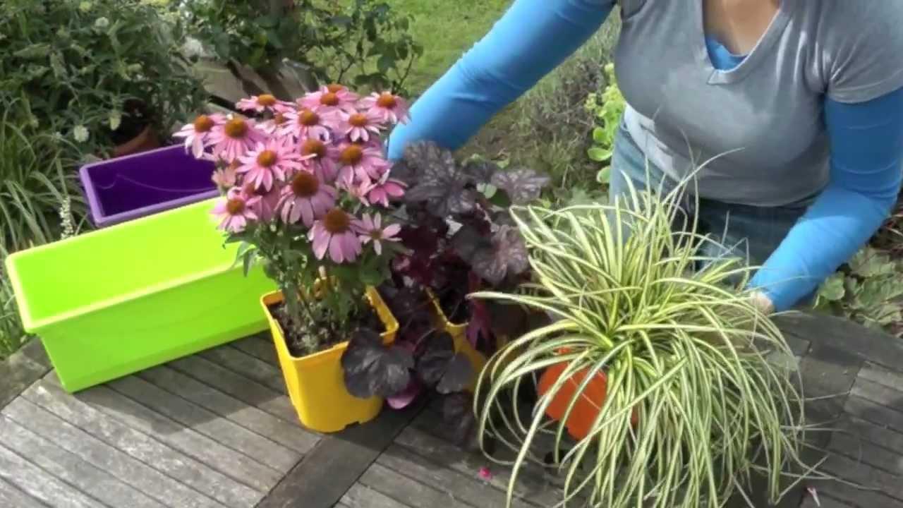 Plantes jardinieres exterieures l 39 atelier des fleurs for Plante fleurie jardin