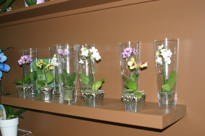mini orchid e entretien l 39 atelier des fleurs. Black Bedroom Furniture Sets. Home Design Ideas