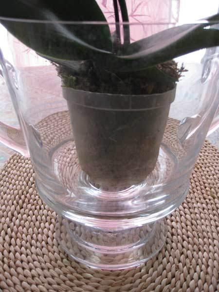 Entretien des orchid es en pot apr s floraison l 39 atelier - Comment garder une orchidee ...