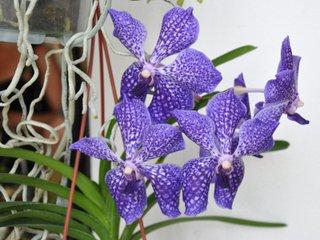 soins aux orchid es apr s floraison l 39 atelier des fleurs. Black Bedroom Furniture Sets. Home Design Ideas