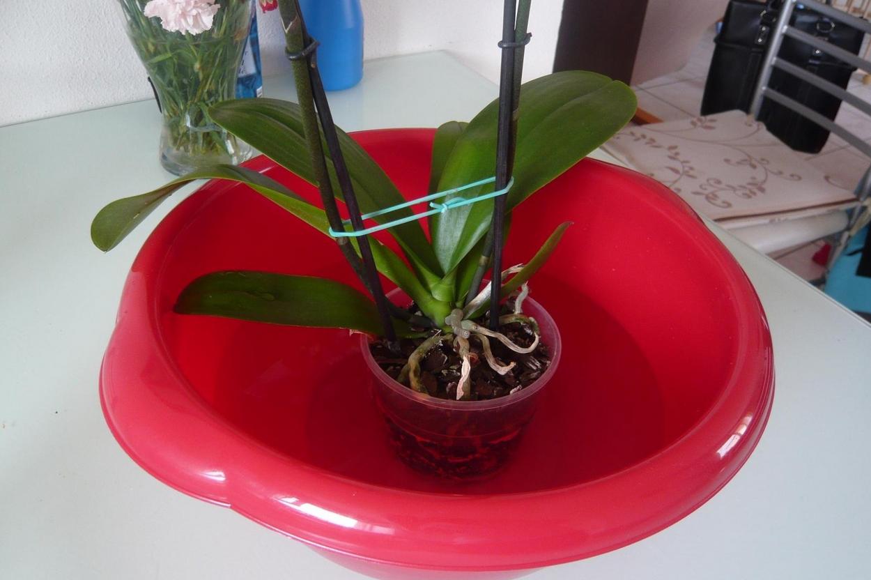 entretien d une orchid e l 39 atelier des fleurs. Black Bedroom Furniture Sets. Home Design Ideas