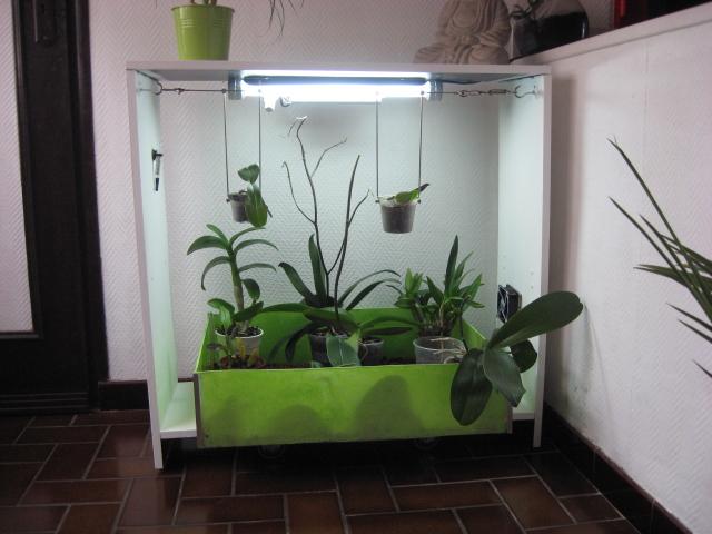 Bac pour orchid es l 39 atelier des fleurs - Comment garder une orchidee ...
