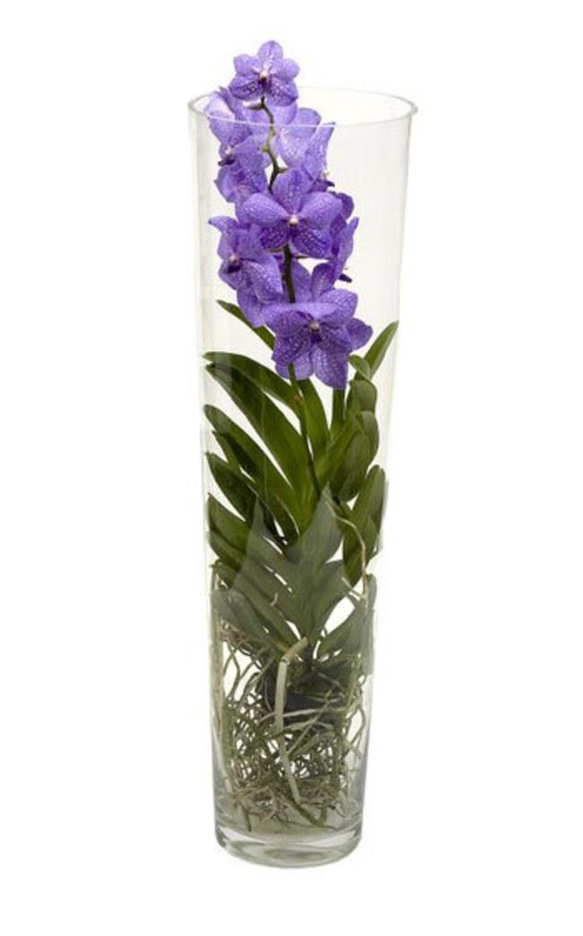 comment s occuper d orchid e l 39 atelier des fleurs. Black Bedroom Furniture Sets. Home Design Ideas