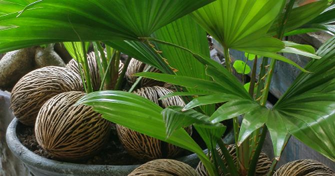 Plante d int rieur exotique l 39 atelier des fleurs for Meilleur plante interieur