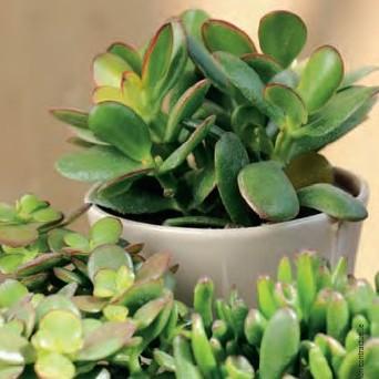 Plantes grasse d int rieur l 39 atelier des fleurs - Plantes grasses d interieur ...