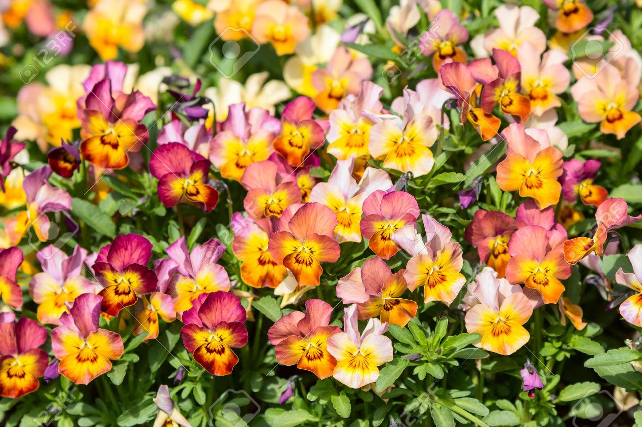 Une fleurs de jardin ici l 39 atelier des fleurs for Vasques pour fleurs jardin