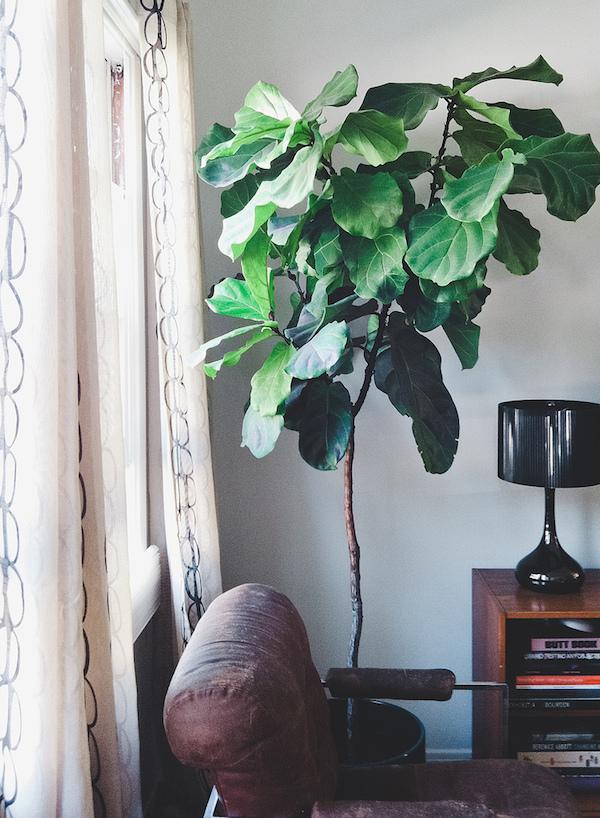 Grosse Plante Interieur L Atelier Des Fleurs