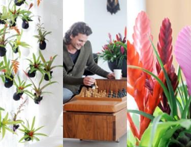 plantes interieures faciles d entretien l 39 atelier des fleurs. Black Bedroom Furniture Sets. Home Design Ideas