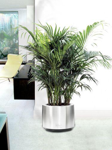 Pot plante verte d int rieur l 39 atelier des fleurs for Grandes plantes en pot
