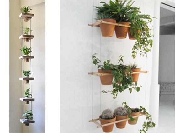 Plante suspendue int rieur l 39 atelier des fleurs for Meilleur plante interieur