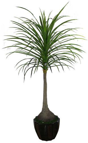 Plante verte haute l 39 atelier des fleurs for Plante verte haute exterieur