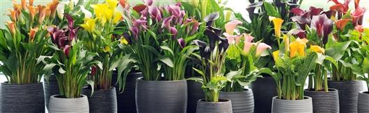 Plantes fleuries int rieur l 39 atelier des fleurs - Plante interieur fleurie toute l annee ...