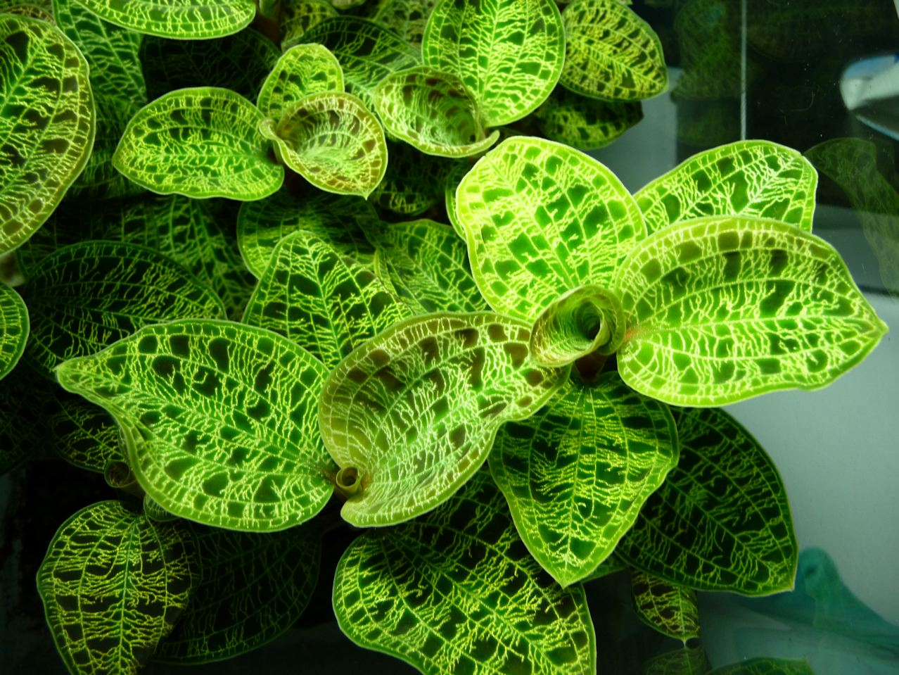 plante exotique int rieur l 39 atelier des fleurs. Black Bedroom Furniture Sets. Home Design Ideas