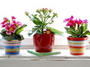 plantes fleuries d int rieur l 39 atelier des fleurs. Black Bedroom Furniture Sets. Home Design Ideas
