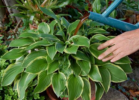 Plante verte d ext rieur l 39 atelier des fleurs for Plantes vertes exterieur