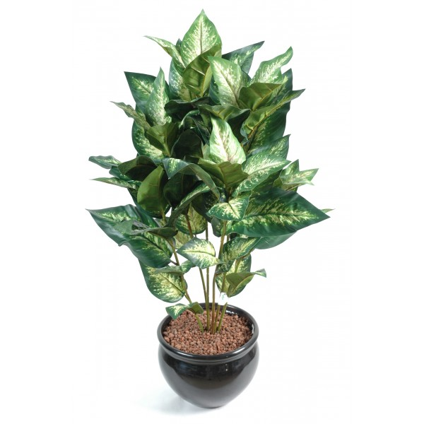 achat plante interieur en ligne l 39 atelier des fleurs. Black Bedroom Furniture Sets. Home Design Ideas