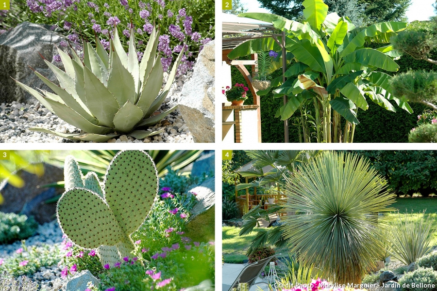 une plante exotique exterieur ici l 39 atelier des fleurs. Black Bedroom Furniture Sets. Home Design Ideas