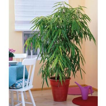 Plante d int rieur ficus l 39 atelier des fleurs for Meilleur plante interieur