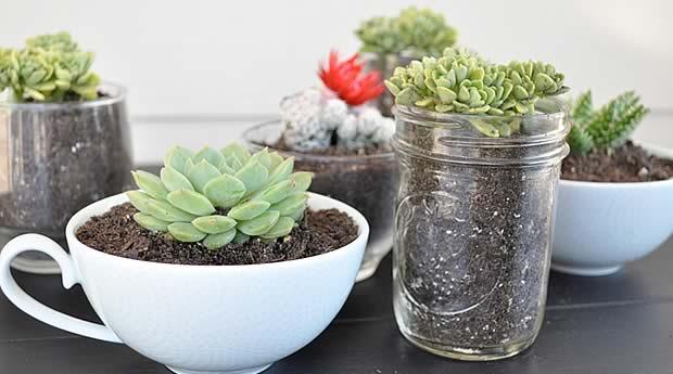 Plante grasse d int rieur l 39 atelier des fleurs for Meilleur plante interieur