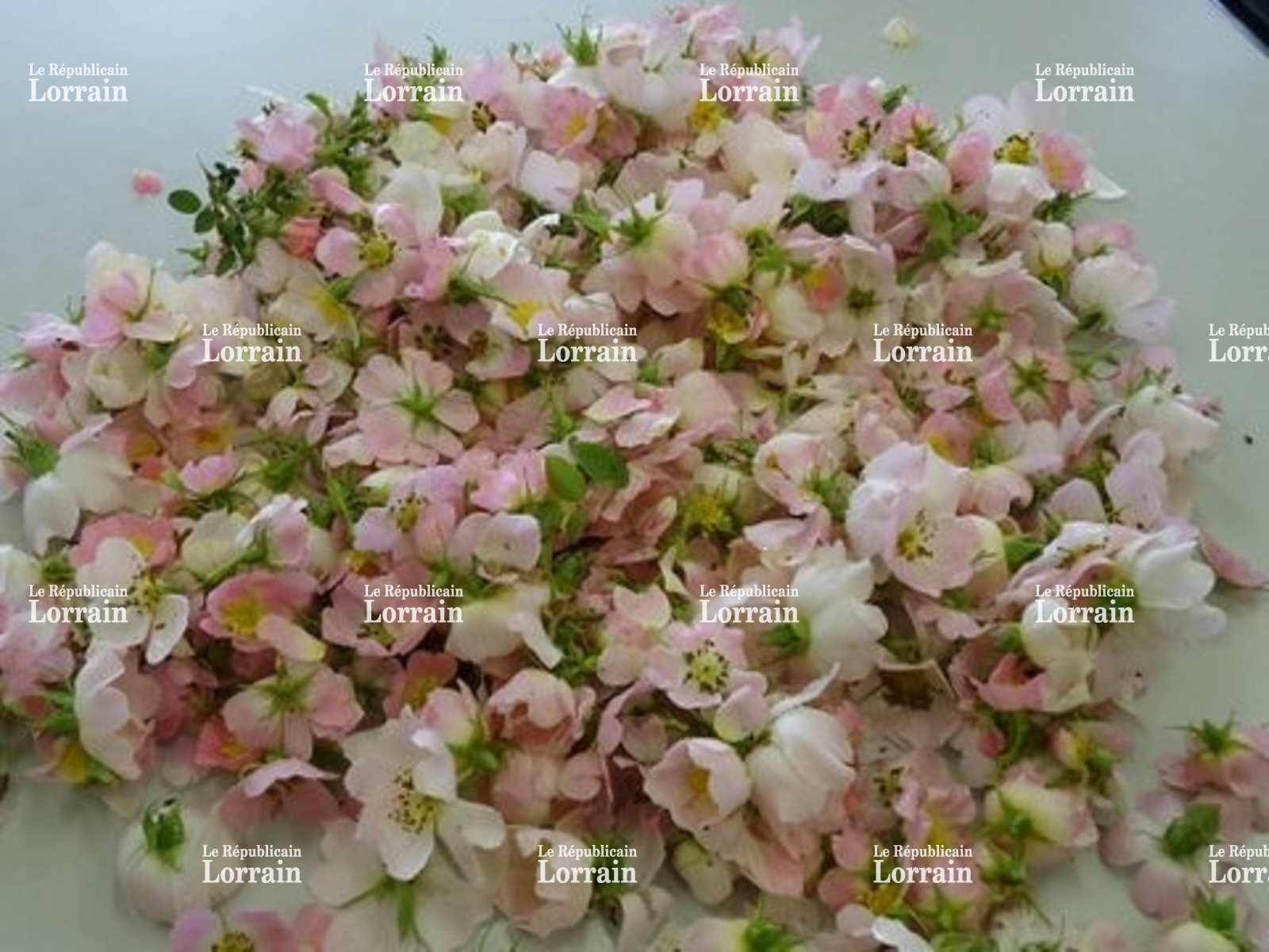 Une acheter fleurs en gros ici l 39 atelier des fleurs - Fleurs coupees en gros pour particulier ...