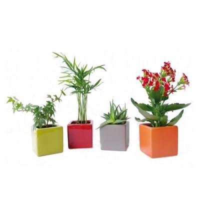 Mini plante l 39 atelier des fleurs for Mini plantes vertes