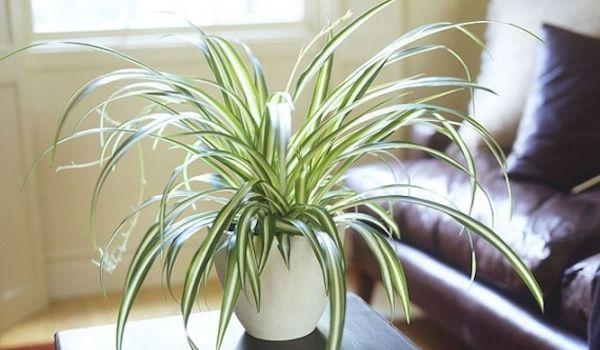 plante d appartement l 39 atelier des fleurs. Black Bedroom Furniture Sets. Home Design Ideas