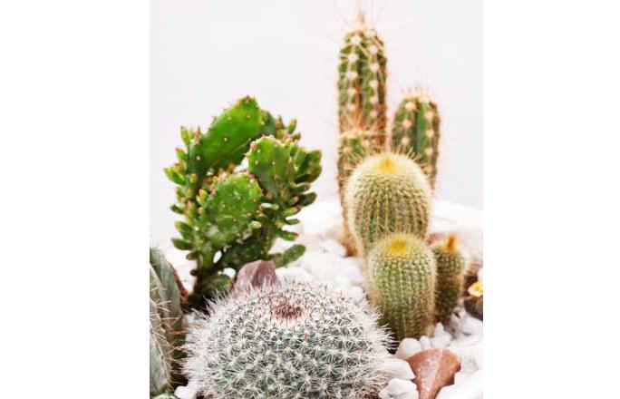 Plante maison l 39 atelier des fleurs for Meilleur plante interieur