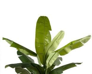 Plante d ext rieur l 39 atelier des fleurs for Plante verte exterieure