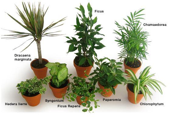Petite plante verte d int rieur l 39 atelier des fleurs - Petite plante d interieur ...