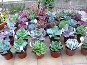 plantes grasses exterieur l 39 atelier des fleurs. Black Bedroom Furniture Sets. Home Design Ideas